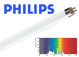 Świetlówka liniowa PHILIPS Master ActiViva Natural 24W 549mm 8000K 1650lm T5 8711500951694 KGO PHILIPS Lighting